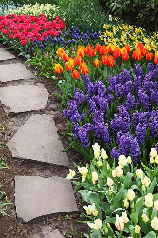garden_lawn_flowers_garden_care_service_ezy (2)