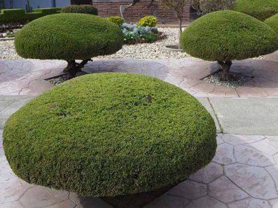 garden_maintenance_lawn_mowing_western_sydney_near_me_cheap