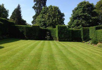 lawn_mowing_garden_care_ezy_near_me (4)