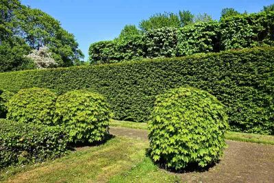 hedging_pruning_trimming_garden_care